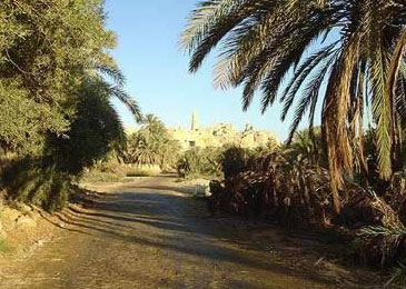 A typical Path through the Siwa Oasis in Egypt