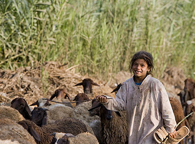 A young goat herder and  her flock near Tanta