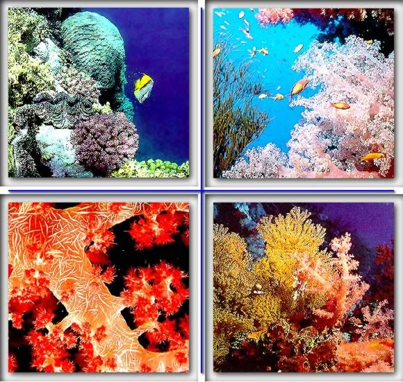 The Coral Gallery