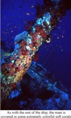As with the rest of the ship, the mast is covered in some extremely colorful soft corals.