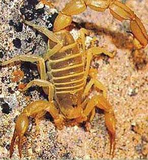 The Scorpion in Ancient Egypt