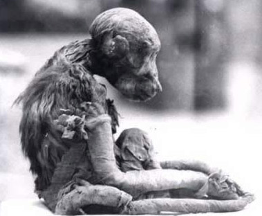 Mummified monkey