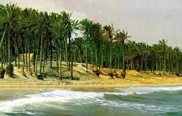 One of the tree lined beachs of Al-Arish on Egypt's Sinai North Coast
