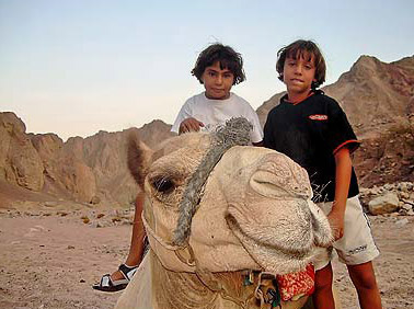 A camel ride is always good fun, just as this one was.