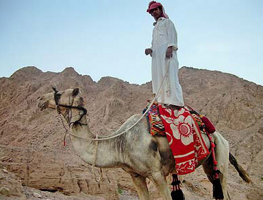 Everyone is into extreme sports these days - being met buy our Bedouin guides