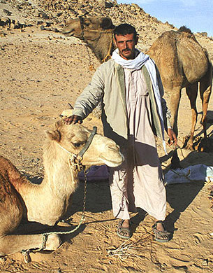 A bedouin with his camels
