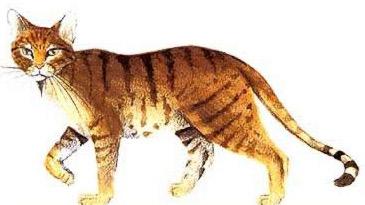 Warrior Cat Rp Starter