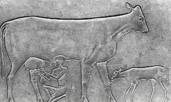 The Diet of the Ancient   Egyptians