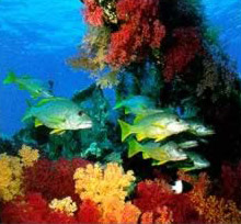 Coral and Fish in the Red Sea of Egypt