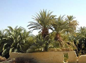 The Gardens of the Farafra Oasis