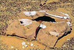 An ancient Whale Jaw bone from Egypt's Fayoum