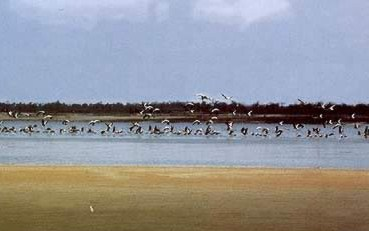 The Fayoum remains rich in bird life