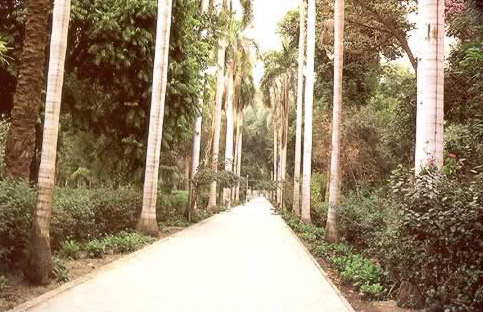 Kitchener's Island (Botanical Gardens)  at Aswan