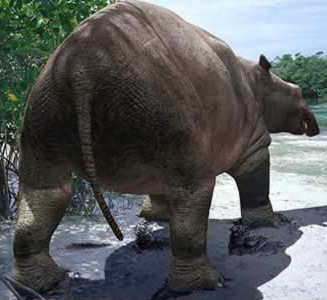An artist's rendering of a  Moeritherium