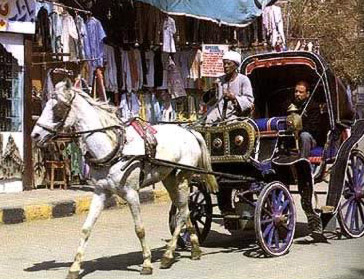 A hantoor (carriage) in Luxor