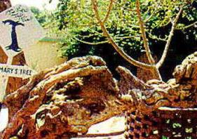 Árvore de Santa Maria - Matariyah, Cairo