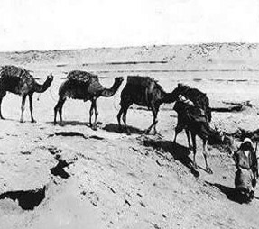 One of Talba's Caravans to the Fayoum