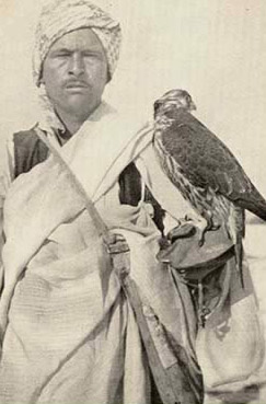 A typical Bedouin Falconer in the Lybian Desert