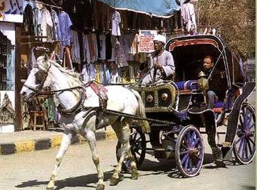 These horse drawn carriages can be found in most of Egypt's Nile Valley  tourist cities