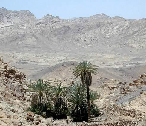 Lonely Oasis in the Sinai