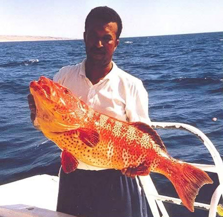 Another Interesting Catch in the Red Sea