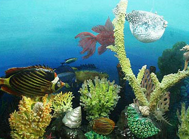 A display of fish and coral in the Red Sea