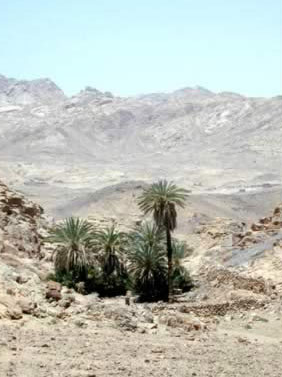 Sinai dessert have occasional trees upon the closer look.