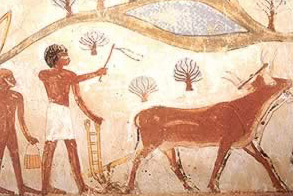 Drawing of Farmers Plowing Field with Two Oxen at the Nakht Tomb in Luxor, Egypt