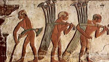 Workers harvesting and carrying papyrus for use in making a boat