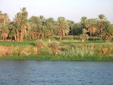 Along the Bank of the Nile