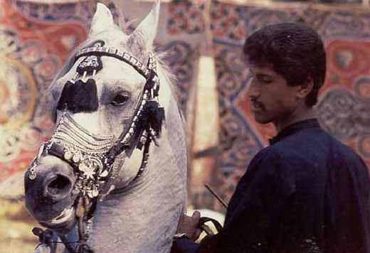 Trainer of Arabian Horses