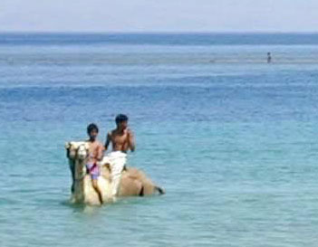 childern use camels to swim in the sparkling clean waters of Sinai