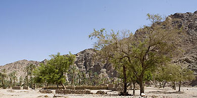 A view of the Feiran Oasis