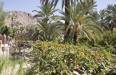 The gardens of the  Monastery of Moses near the Feiran Oasis