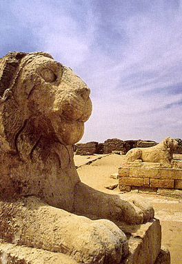 The great lions at Tebtunis