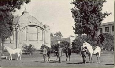 State-owned Arab horses outside the Cotton Museum in Cairo