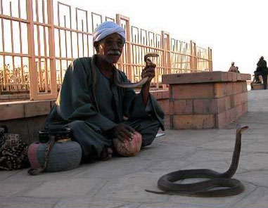 The snake charmer at Kom Ombo