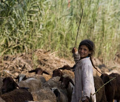 Lets get a move on, its time to explore Egypt: A young sheep herder in the Nile Delta
