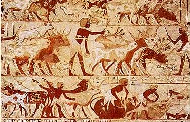 Agricultural scene in the tomb of Userhat showing cattle