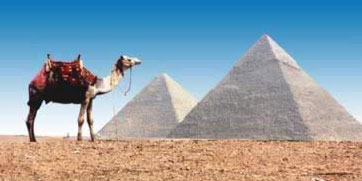 The Pyramids, and a lone camel: Photograph by Carol Mandel
